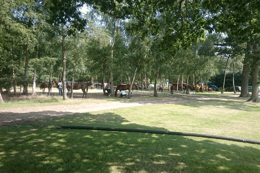 a string of ponies resting under trees
