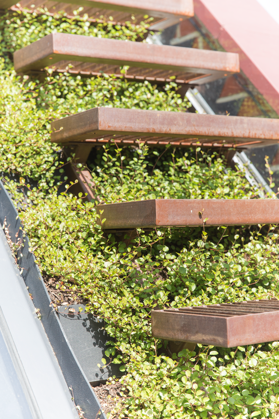 detail of cantilevered steel stair over green roof