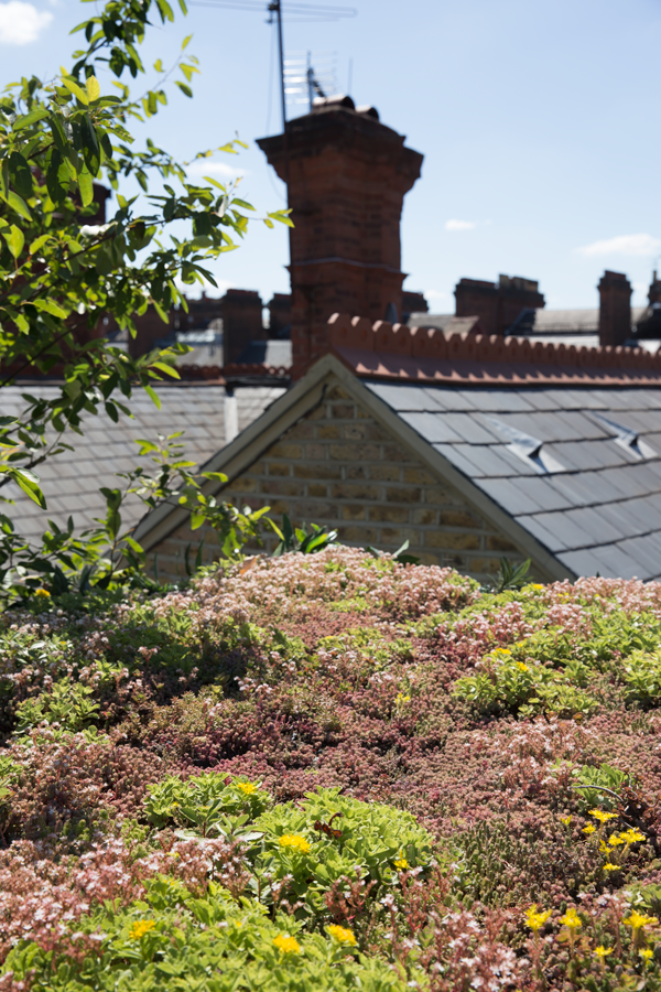 green roof with historic chimneys